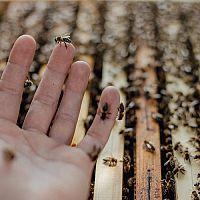 Marian Holub: Keď sa človek o včely stará s láskou, včely mu to oplatia