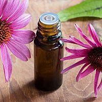Echinacea - kvapky, sirup či čaj. Prírodný liek na posilnenie imunity