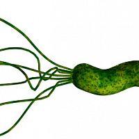 Helikobakter pylori – príznaky. Spravte si test, liečba je komplikovaná