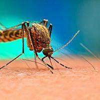 Čo proti komárom vonku? Najúčinnejšie sú repelenty proti komárom