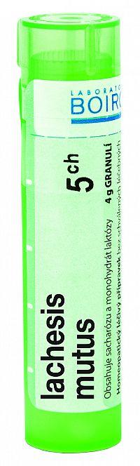 Lachesis Mutus CH5 granule 4g