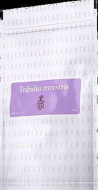Tribulus Terrestris (kotvičník zemný) čaj
