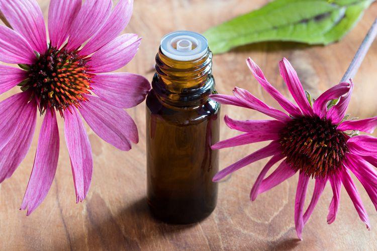 Éterický olej z echinacei purpurovej