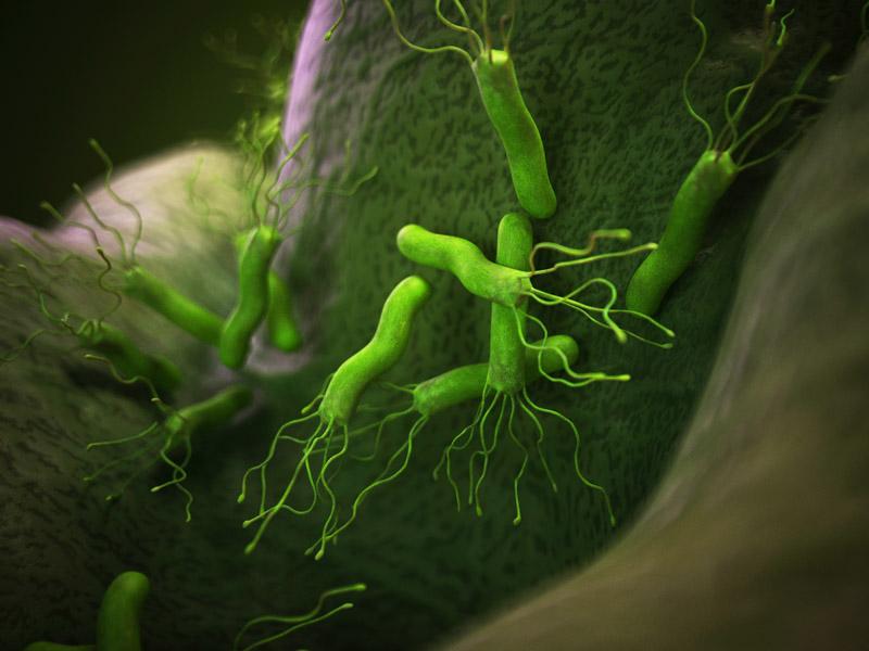 Baktéria helikobakter pylori