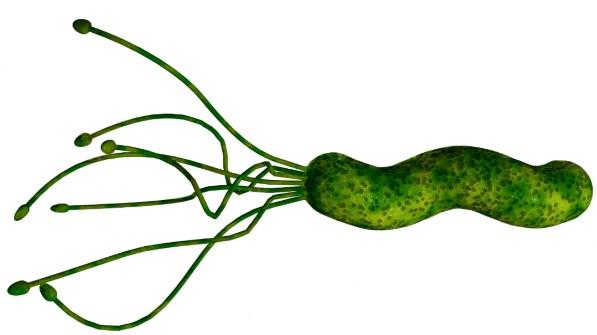 Helicobacter pylori v žalúdku