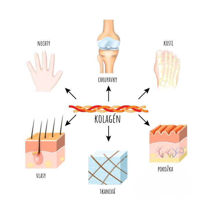 Kolagén a jeho účinky na organizmus
