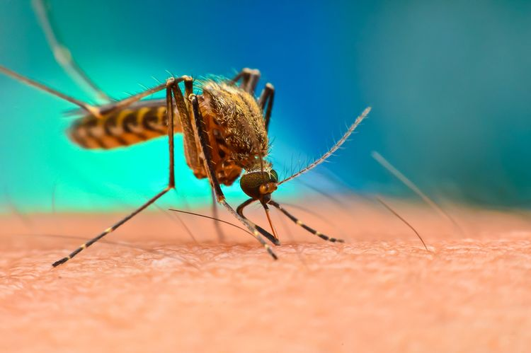 Účinné repelenty proti komárom